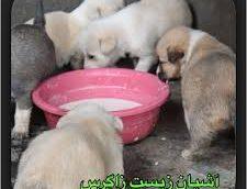 شهرداری کرمانشاه حامی حقوق حیوانات است